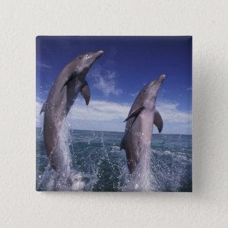 Caribbean, Bottlenose dolphins Tursiops 15 Cm Square Badge
