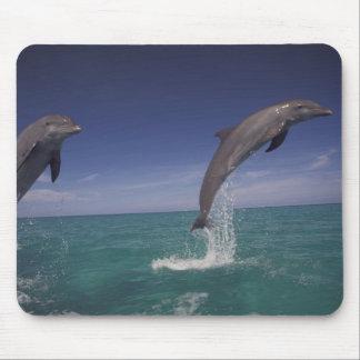 Caribbean, Bottlenose dolphins Tursiops 15 Mouse Mat