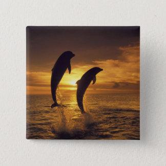 Caribbean, Bottlenose dolphins Tursiops 16 15 Cm Square Badge