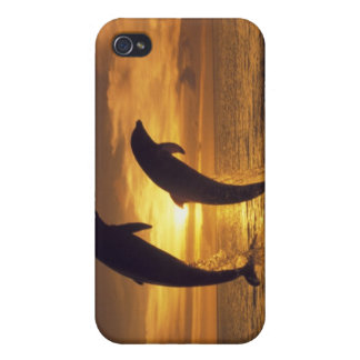 Caribbean, Bottlenose dolphins Tursiops 16 iPhone 4 Case