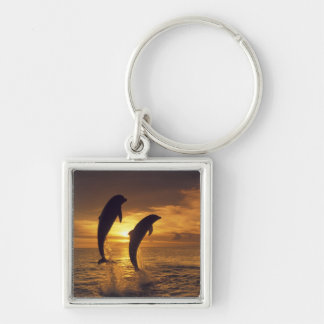 Caribbean, Bottlenose dolphins Tursiops 16 Silver-Colored Square Key Ring