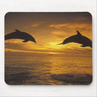 Caribbean, Bottlenose dolphins Tursiops 17 Mouse Mat