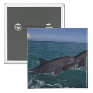 Caribbean, Bottlenose dolphins Tursiops 2 15 Cm Square Badge