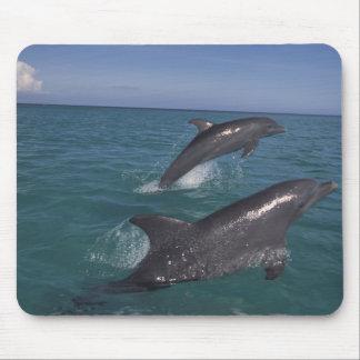 Caribbean, Bottlenose dolphins Tursiops 4 Mouse Mat