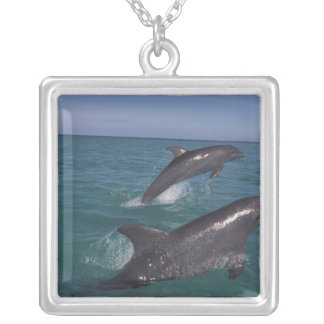 Caribbean, Bottlenose dolphins Tursiops 4 Silver Plated Necklace