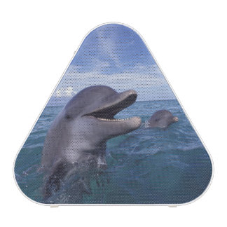 Caribbean, Bottlenose dolphins Tursiops 5