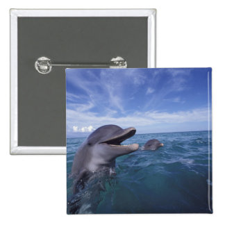 Caribbean, Bottlenose dolphins Tursiops 5 15 Cm Square Badge