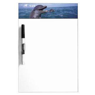 Caribbean, Bottlenose dolphins Tursiops 5 Dry Erase Board