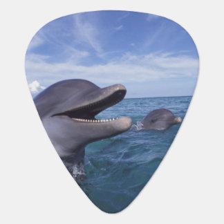 Caribbean, Bottlenose dolphins Tursiops 5 Guitar Pick