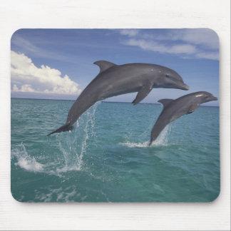 Caribbean, Bottlenose dolphins Tursiops 6 Mouse Mat