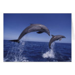 Caribbean, Bottlenose dolphins Tursiops 7 Greeting Card