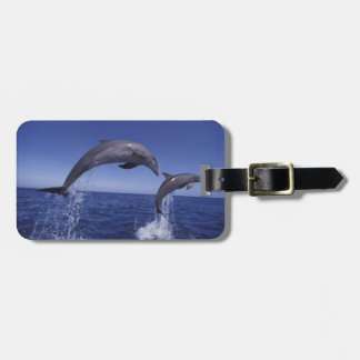 Caribbean, Bottlenose dolphins Tursiops 7 Luggage Tag