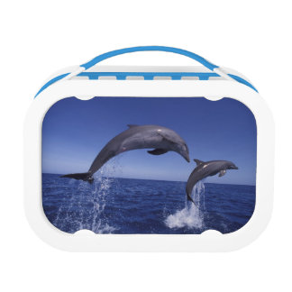 Caribbean, Bottlenose dolphins Tursiops 7 Lunch Box