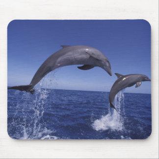 Caribbean, Bottlenose dolphins Tursiops 7 Mouse Mat