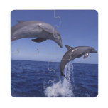 Caribbean, Bottlenose dolphins Tursiops 7 Puzzle Coaster