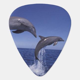 Caribbean, Bottlenose dolphins Tursiops 7 Plectrum