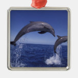 Caribbean, Bottlenose dolphins Tursiops 7 Silver-Colored Square Decoration