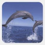Caribbean, Bottlenose dolphins Tursiops 7 Square Sticker