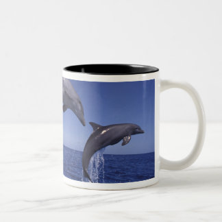 Caribbean, Bottlenose dolphins Tursiops 7 Two-Tone Coffee Mug