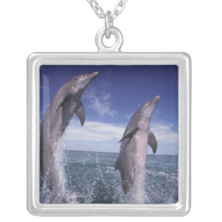 Caribbean, Bottlenose dolphins Tursiops Silver Plated Necklace
