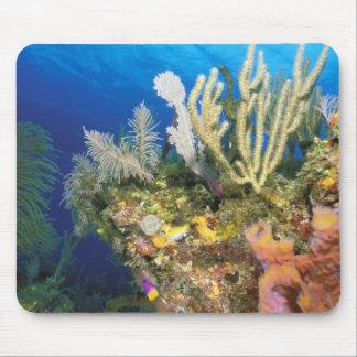 Caribbean. Reef. Mouse Mat