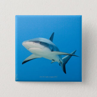 Caribbean reef shark (Carcharhinus perezi) 15 Cm Square Badge