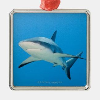 Caribbean reef shark (Carcharhinus perezi) Christmas Ornament