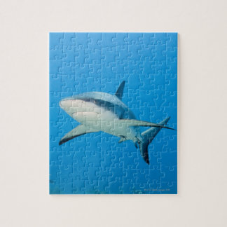Caribbean reef shark (Carcharhinus perezi) Jigsaw Puzzle