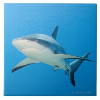 Caribbean reef shark (Carcharhinus perezi) Large Square Tile