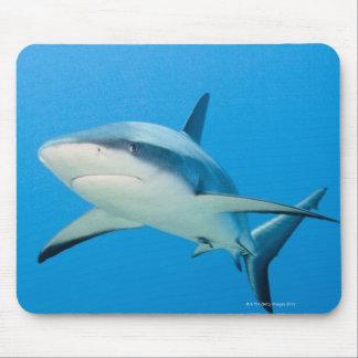 Caribbean reef shark (Carcharhinus perezi) Mouse Mat