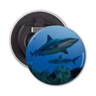 Caribbean Reef Shark Jardines de la Reina Bottle Opener