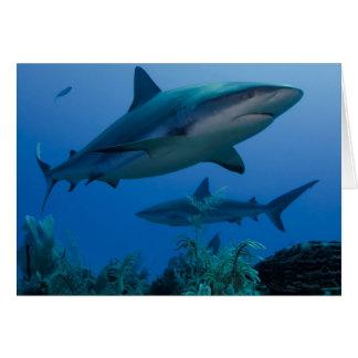 Caribbean Reef Shark Jardines de la Reina Card