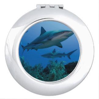 Caribbean Reef Shark Jardines de la Reina Compact Mirrors