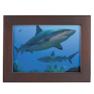 Caribbean Reef Shark Jardines de la Reina Keepsake Box