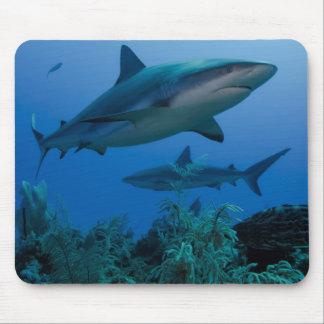 Caribbean Reef Shark Jardines de la Reina Mouse Mat