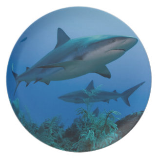 Caribbean Reef Shark Jardines de la Reina Plate