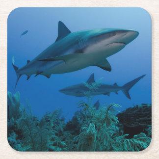 Caribbean Reef Shark Jardines de la Reina Square Paper Coaster