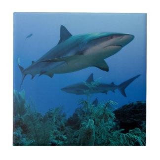 Caribbean Reef Shark Jardines de la Reina Tile