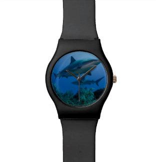 Caribbean Reef Shark Jardines de la Reina Watch
