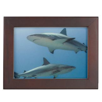 Caribbean Reef Shark Keepsake Box