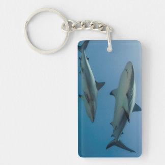 Caribbean Reef Shark Key Ring