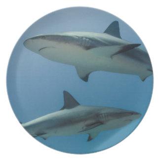 Caribbean Reef Shark Plate