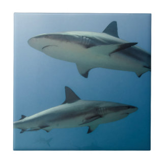 Caribbean Reef Shark Tiles