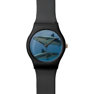 Caribbean Reef Shark Watch