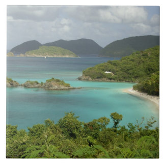 Caribbean, U.S. Virgin Islands, St. John, Trunk Large Square Tile