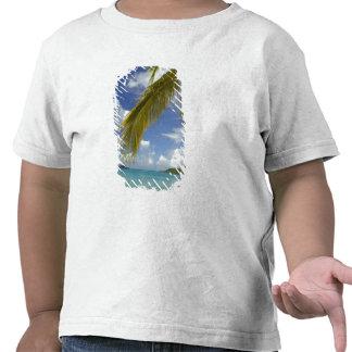 Caribbean, U.S. Virgin Islands, St.Thomas, Shirts