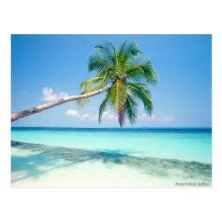 caribean beach post card