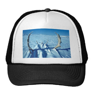 Caribou antlers in the snow hats