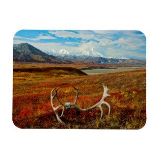 Caribou Antlers On The Alaskan Tundra Rectangular Photo Magnet