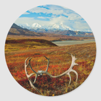Caribou Antlers On The Alaskan Tundra Round Sticker